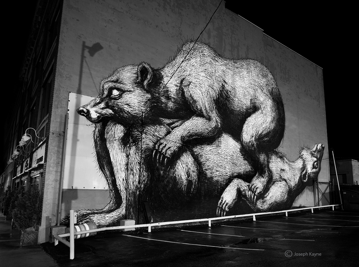 roa,street,art,bears,new,york,night, photo