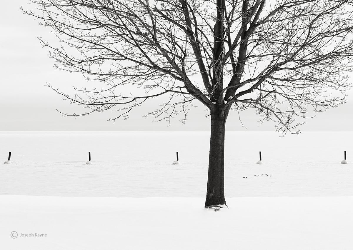 winter,survivor,lone,tree,lake,michigan,shoreline,chicago, photo