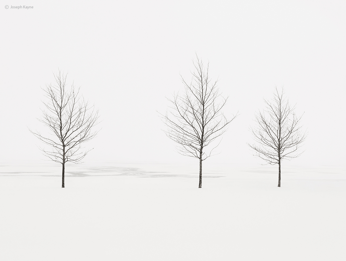 trees,shoreline,frozen,lake,michigan,chicago,polar,vortex, photo