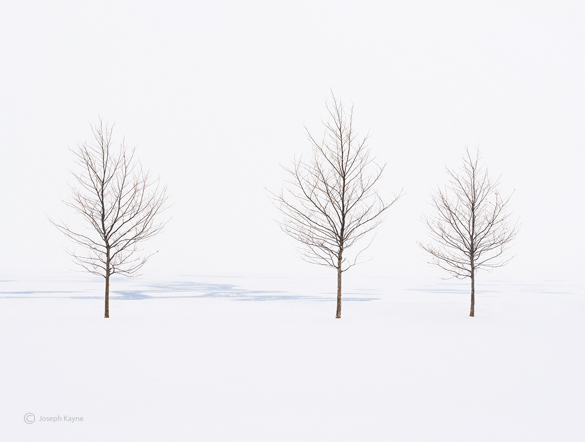 chicago,lake,michigan,trees,frozen,shoreline, photo