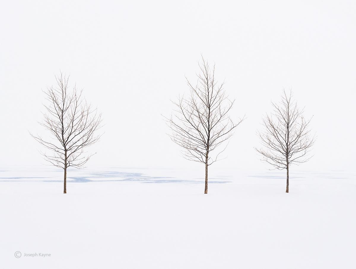 Trees Along Frozen Lake Michigan Shoreline