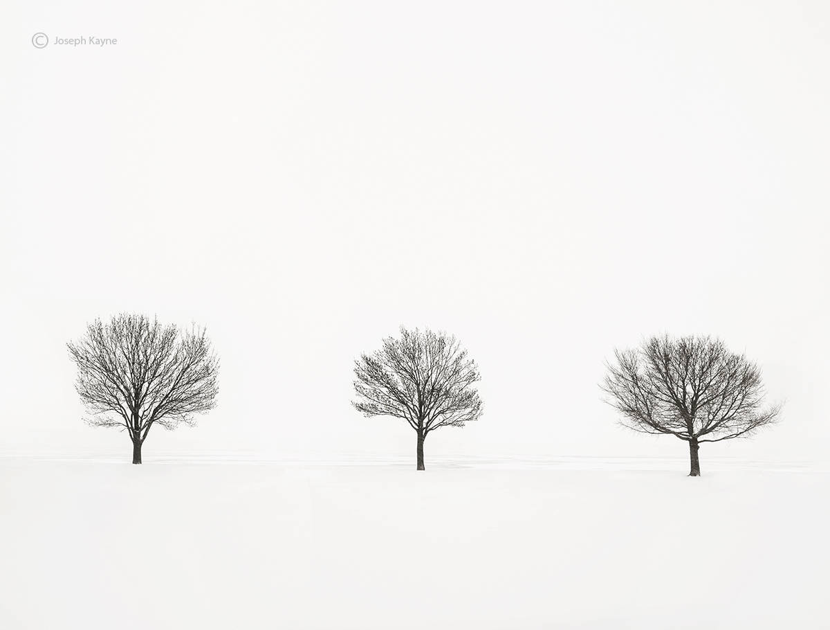solitude,trees,shoreline,frozen,lake,michigan,polar,vortex,chicago, photo