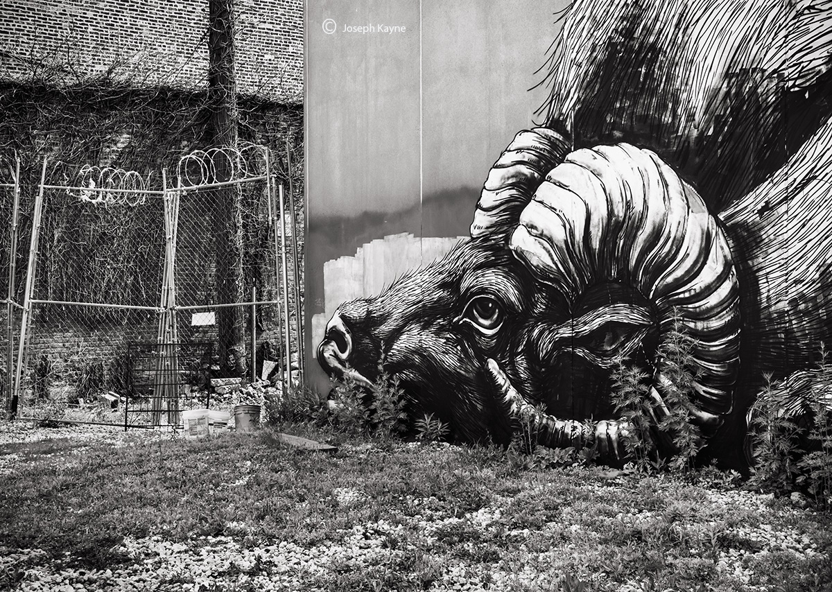 ROA,big,horn,sheep,chicago,street,art, photo