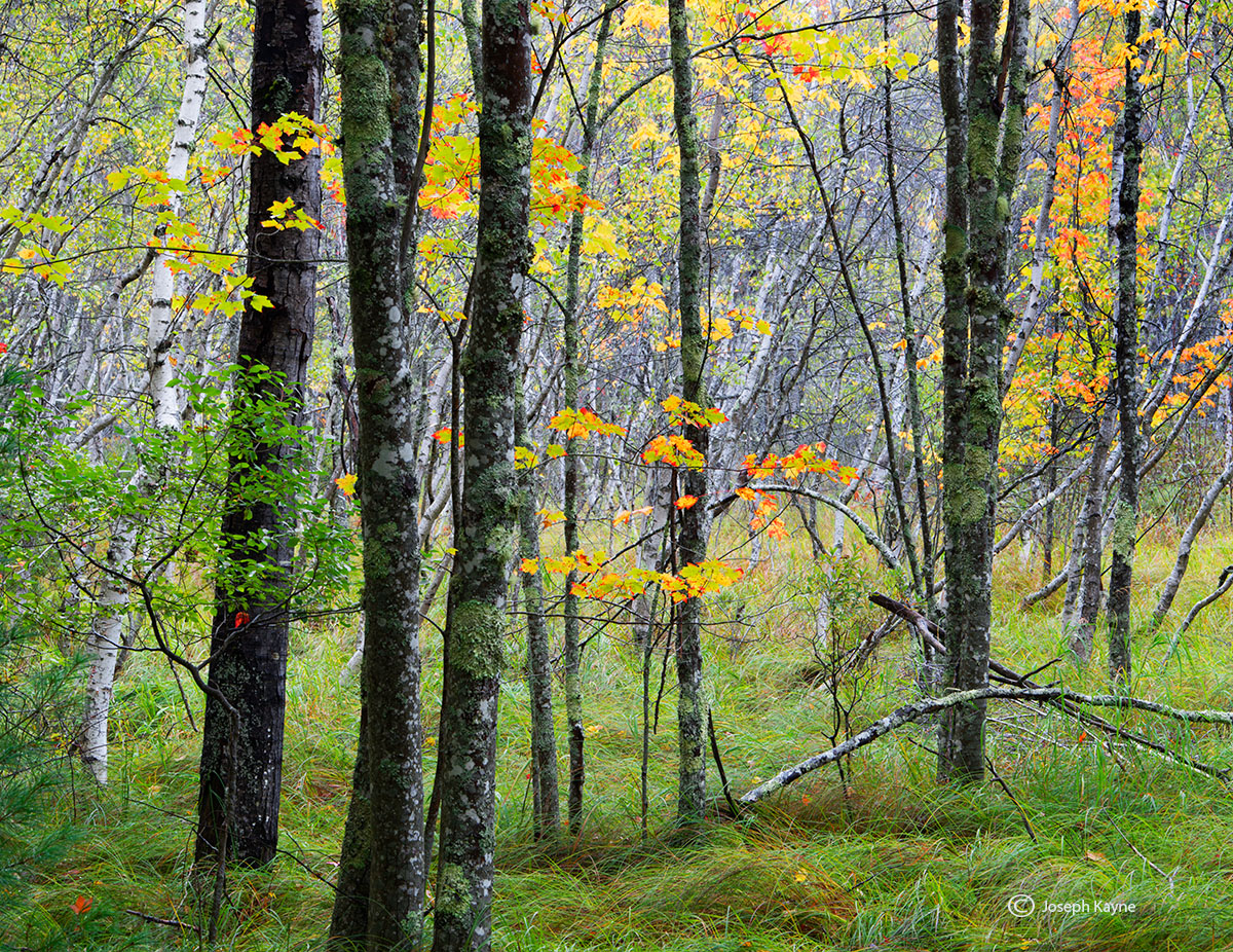autumn,commences,acadia,national,park,maine, photo