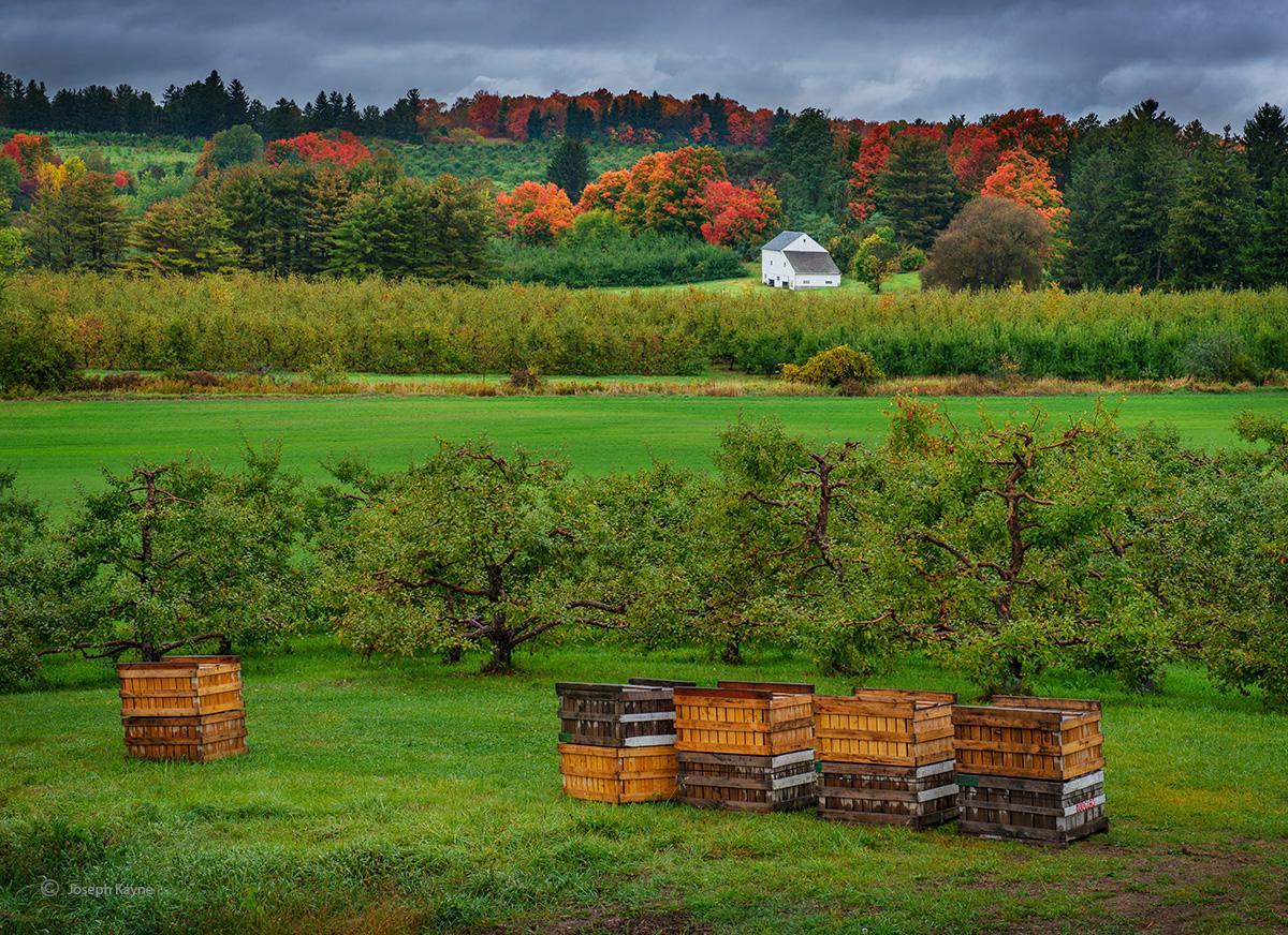 vermont,apple,orchard,autumn, photo