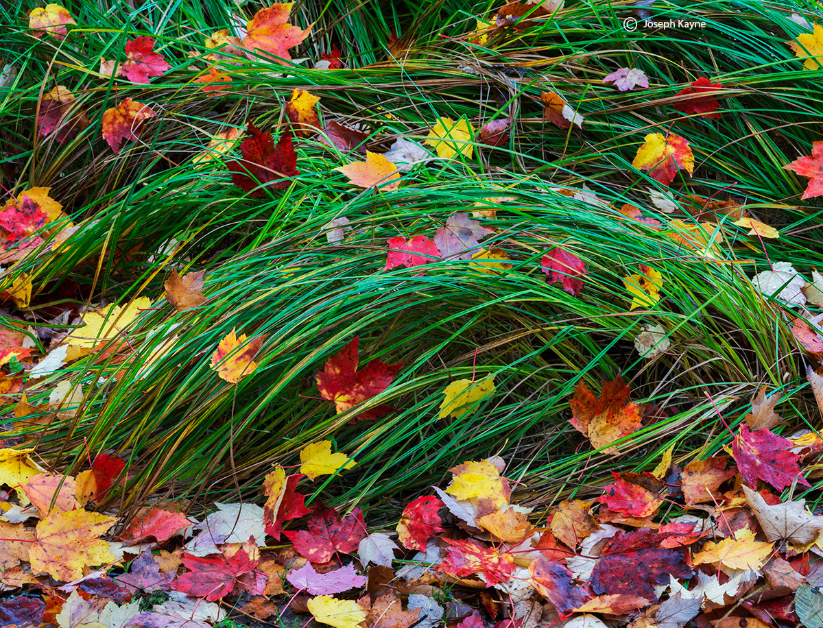 under,the,canopy,acadia,national,park,maine,autumn,leaves,grasses, photo