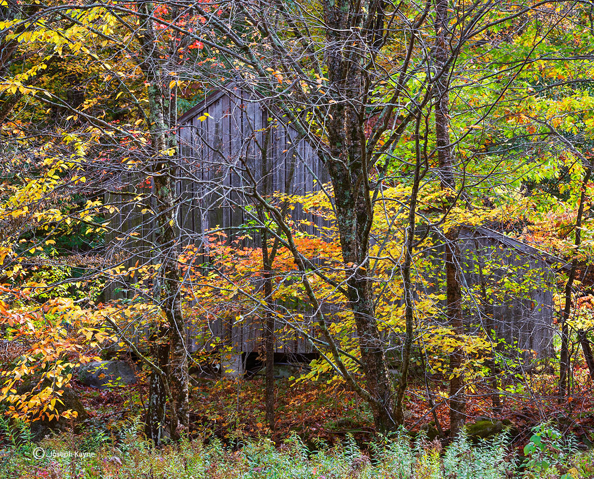 new,england,vermont,barn,woods,fall,foliage, photo