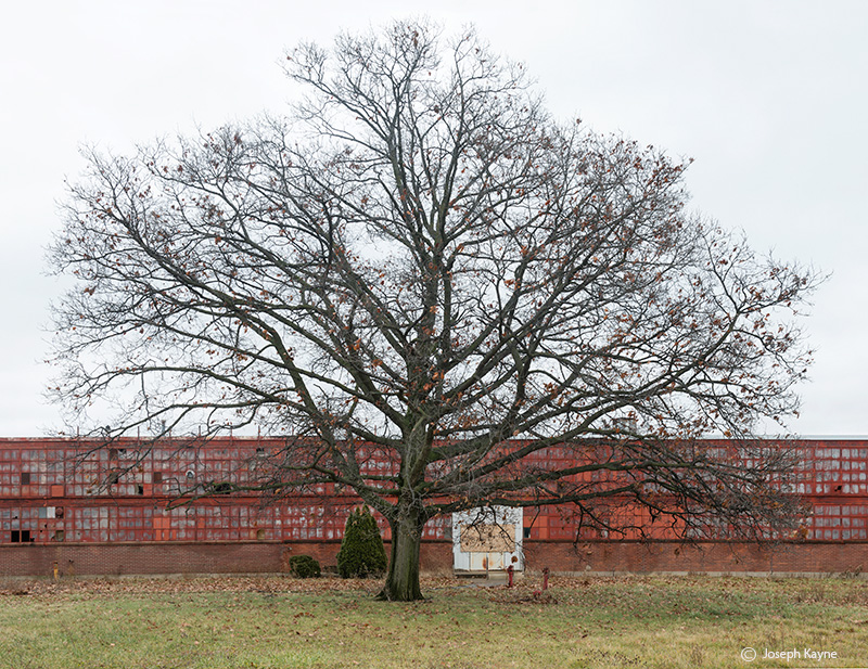 abandoned,warehouse,oak,tree,nature,reclamation, photo