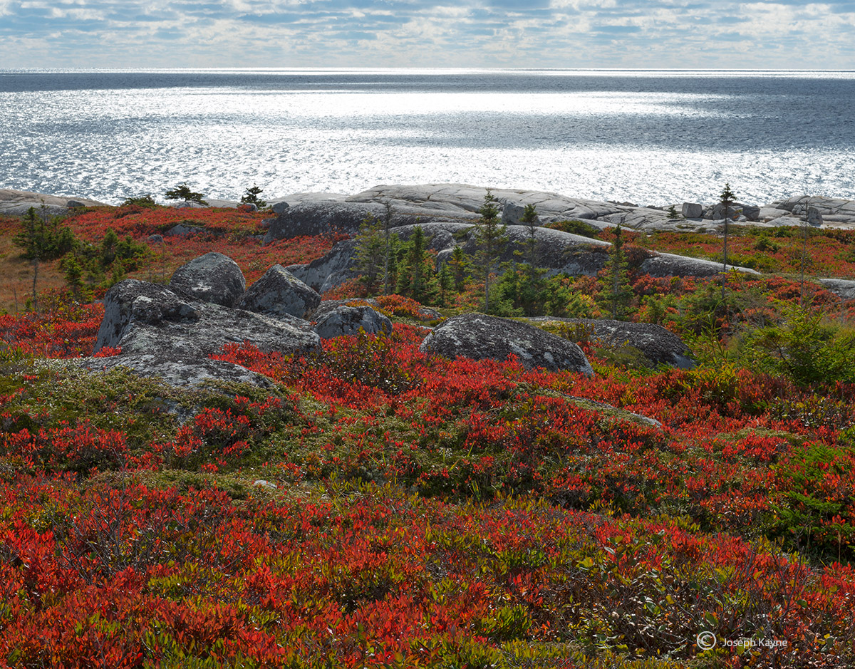 wild,blueberries,atlantic,coast,autumn,nova,scotia,canada, photo