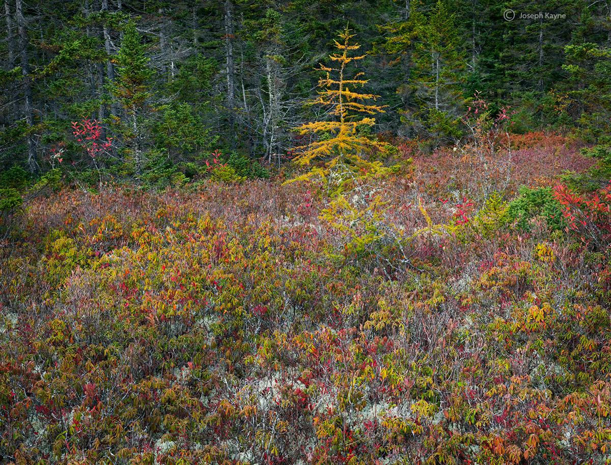 A Rare Bog Displays Autumn Color