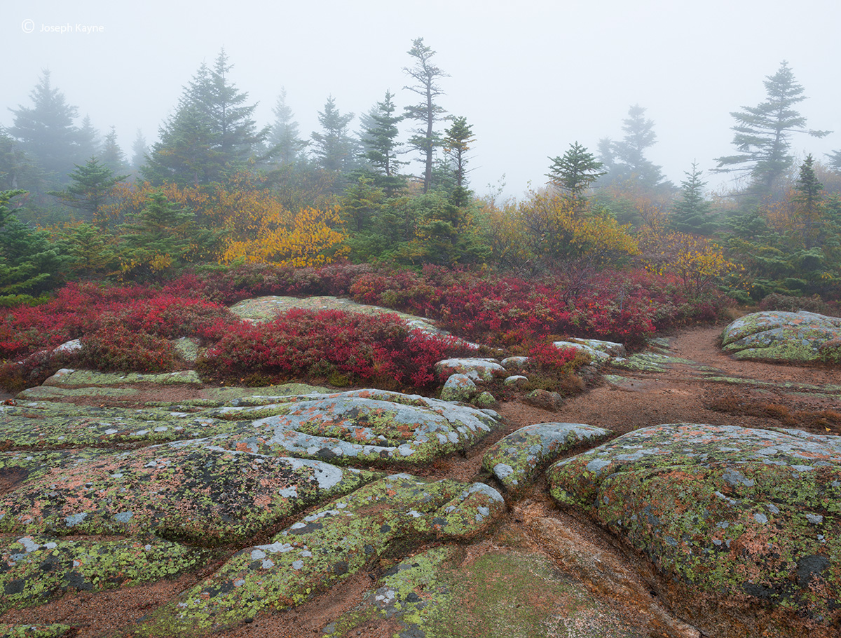 granite,toprocks,wild,blueberries,foggy,morning,cadillac,mountain, photo
