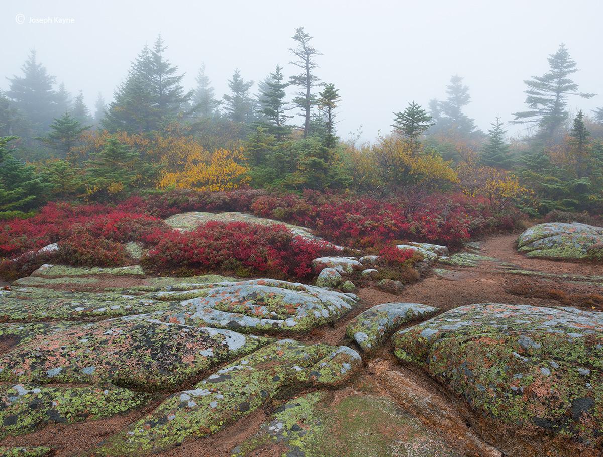 granite,toprocks,wild,blueberries,foggy,morning,cadillac,mountain, photo