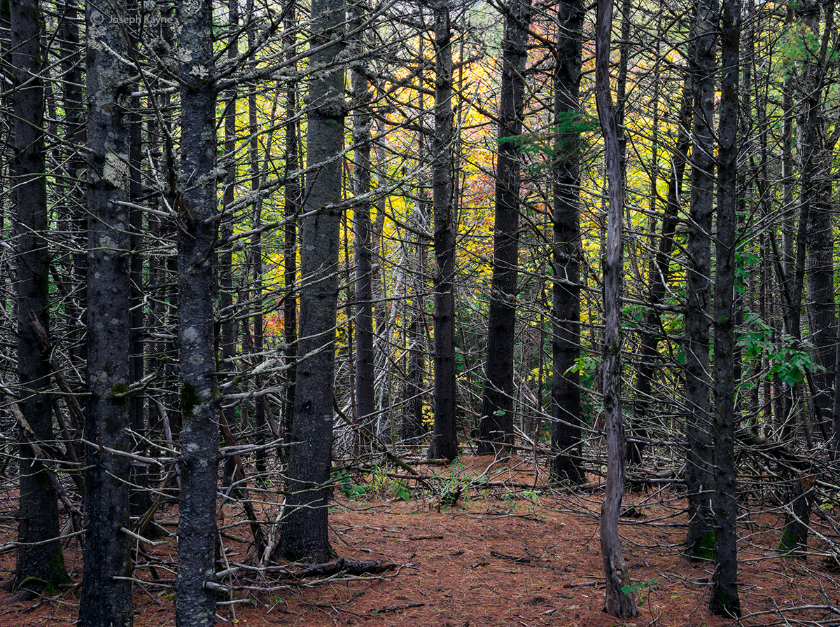 deep,in,the,forest,acadia,national,park,maine,autumn, photo