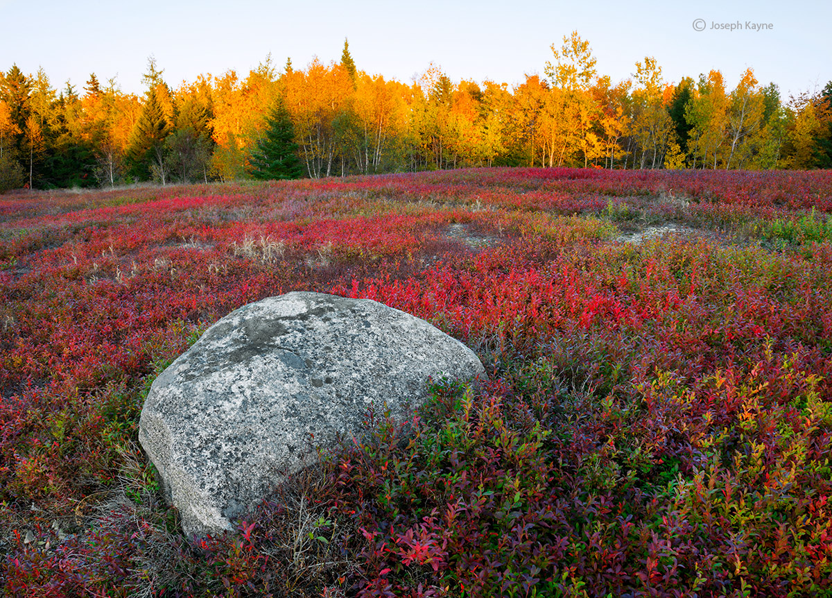 maine,blueberry,field,boulder,sunset, photo