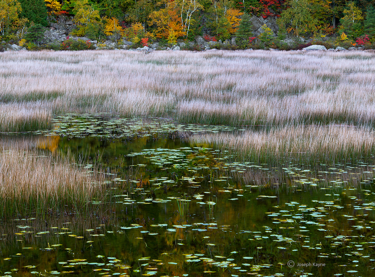 glacial,tarn,maine,white,grasses, photo