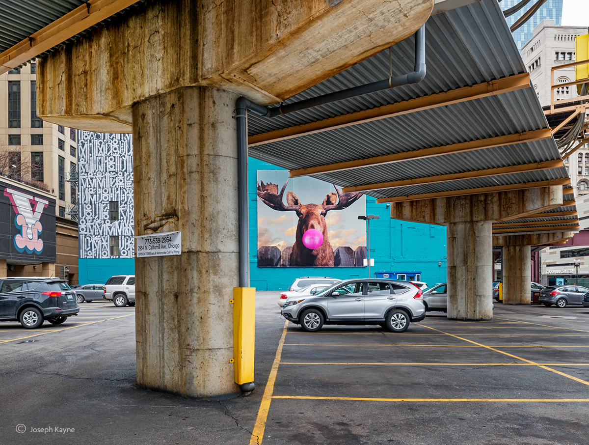 Moose,chicago,street,art,parking,lot,chill, photo