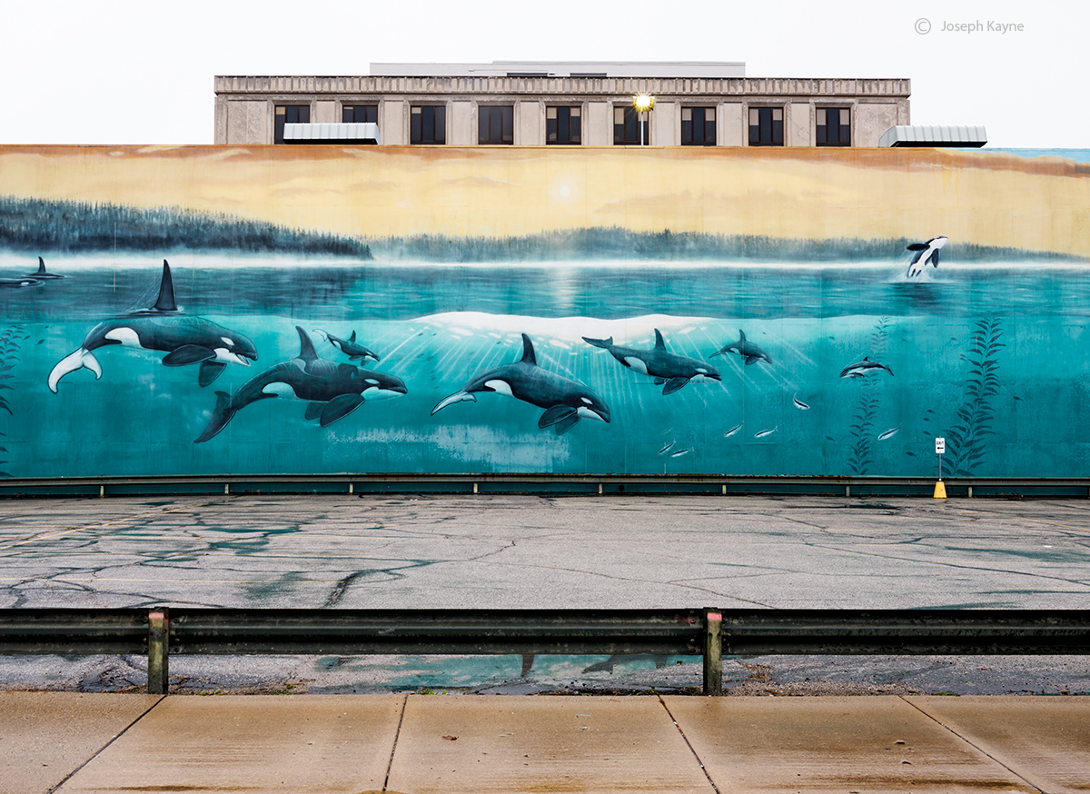 concrete,ocean,orca,parking,lot,indiana,wyland, photo