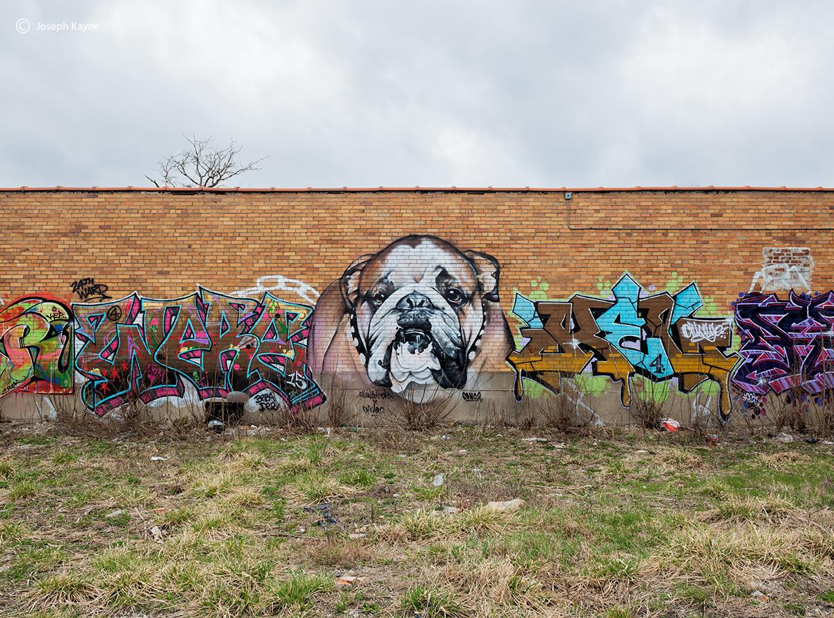 bull,dog,graffiti,24th,ward,crew,chicago,ceno2, photo