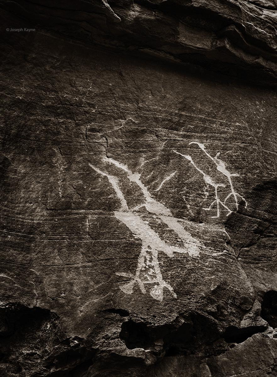 Ancestral Puebloan Bird Petroglyphs