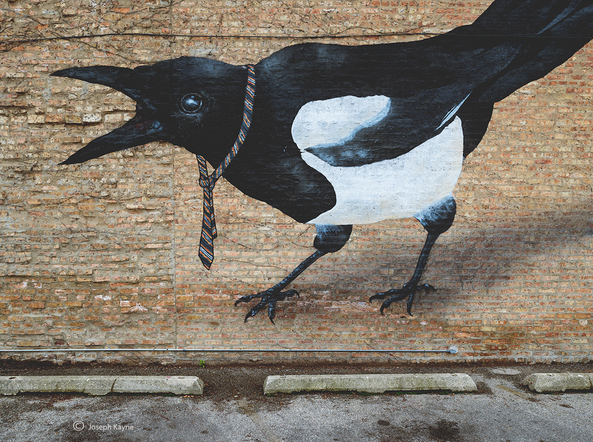 tuxedo,bird,mural,ella,and,pitr,chicago, photo