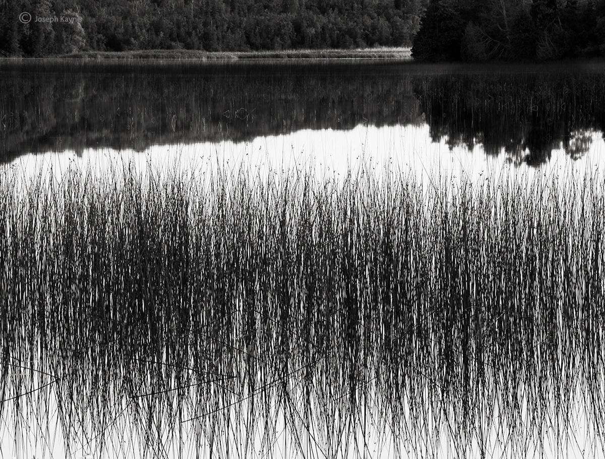 reeds,summer,wisconsin,lake, photo