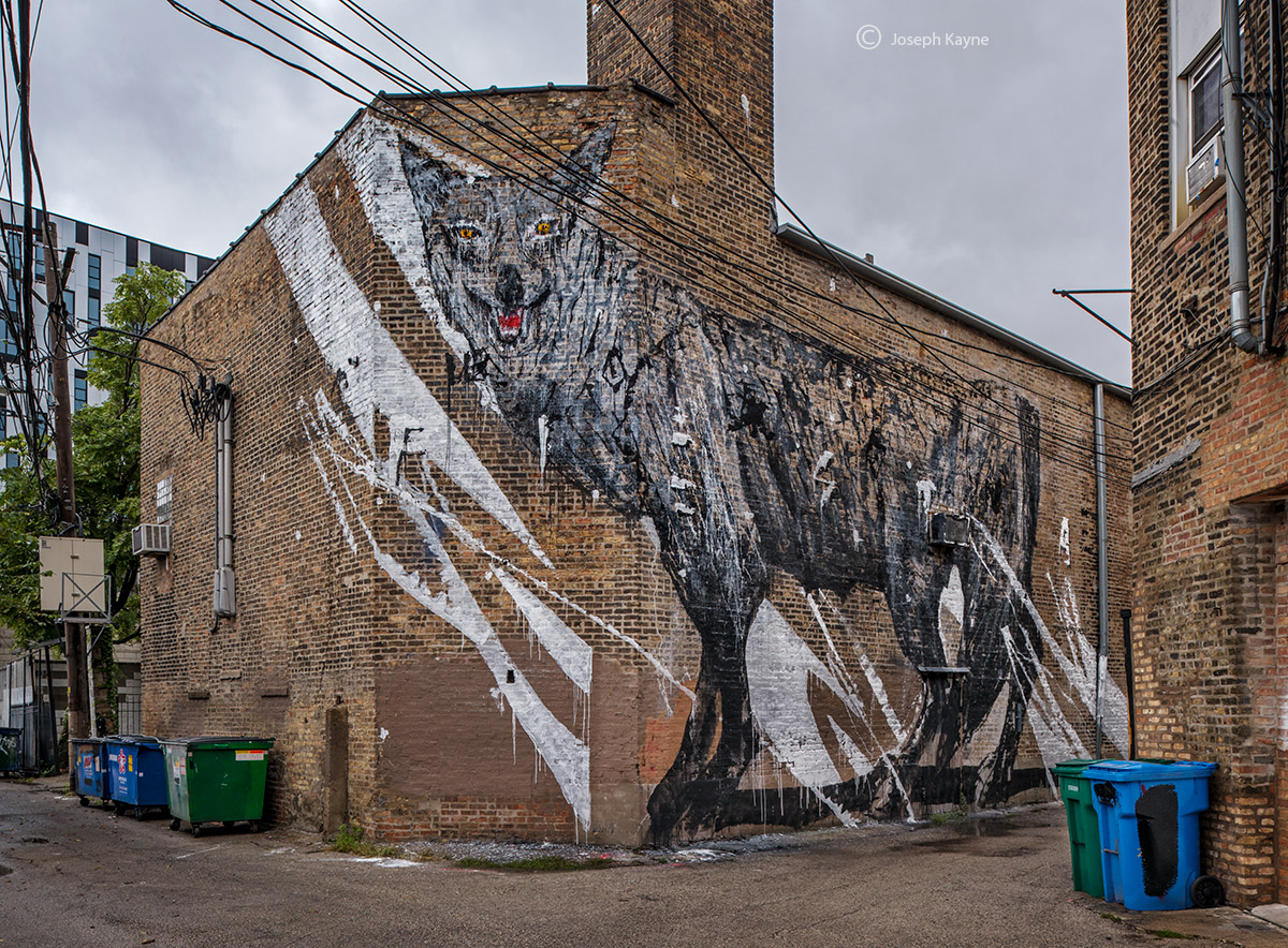 city,predator,coyote,mural,kwoone,chicago, photo