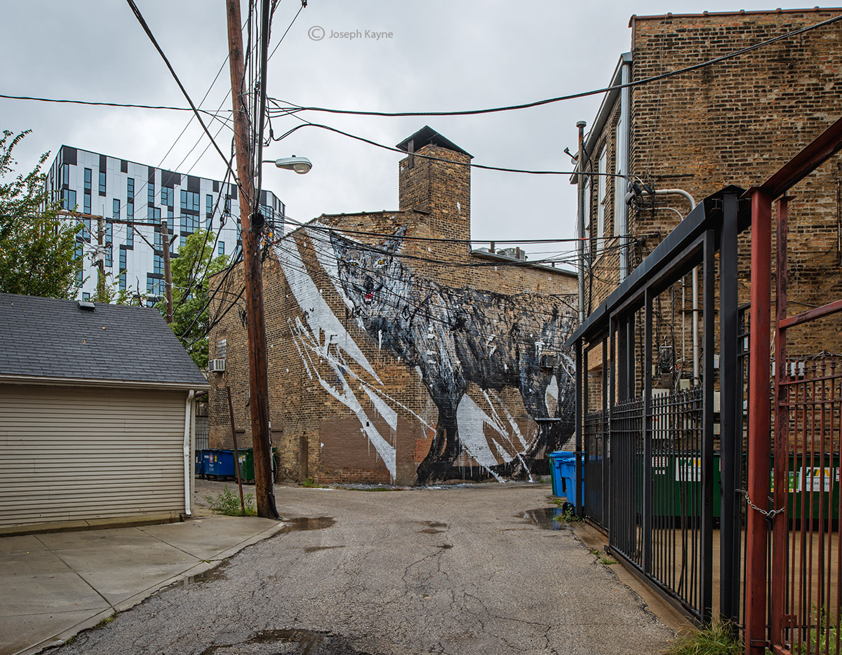 Chicago Alleys,Coyote Mural by Kwoone