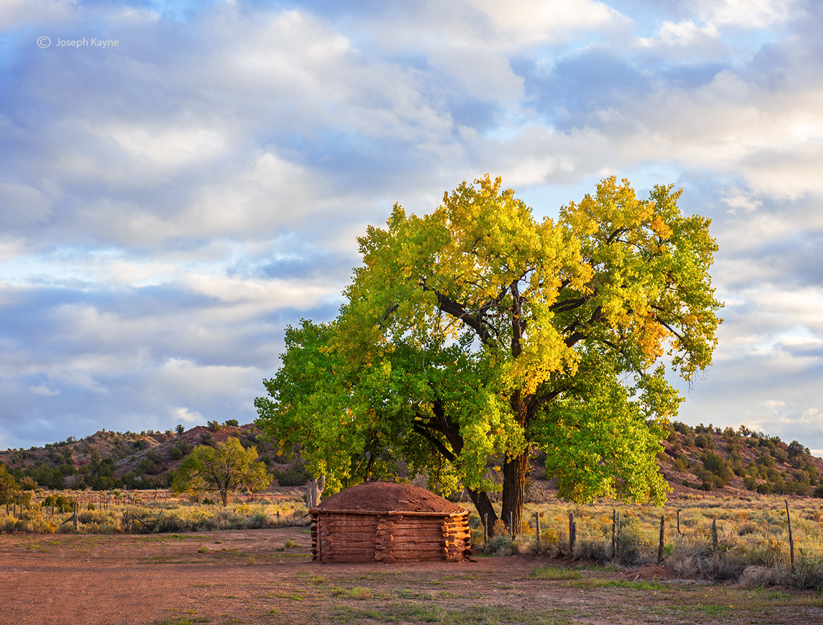 Autumn Cottonwood Tree & Navajo Hogan