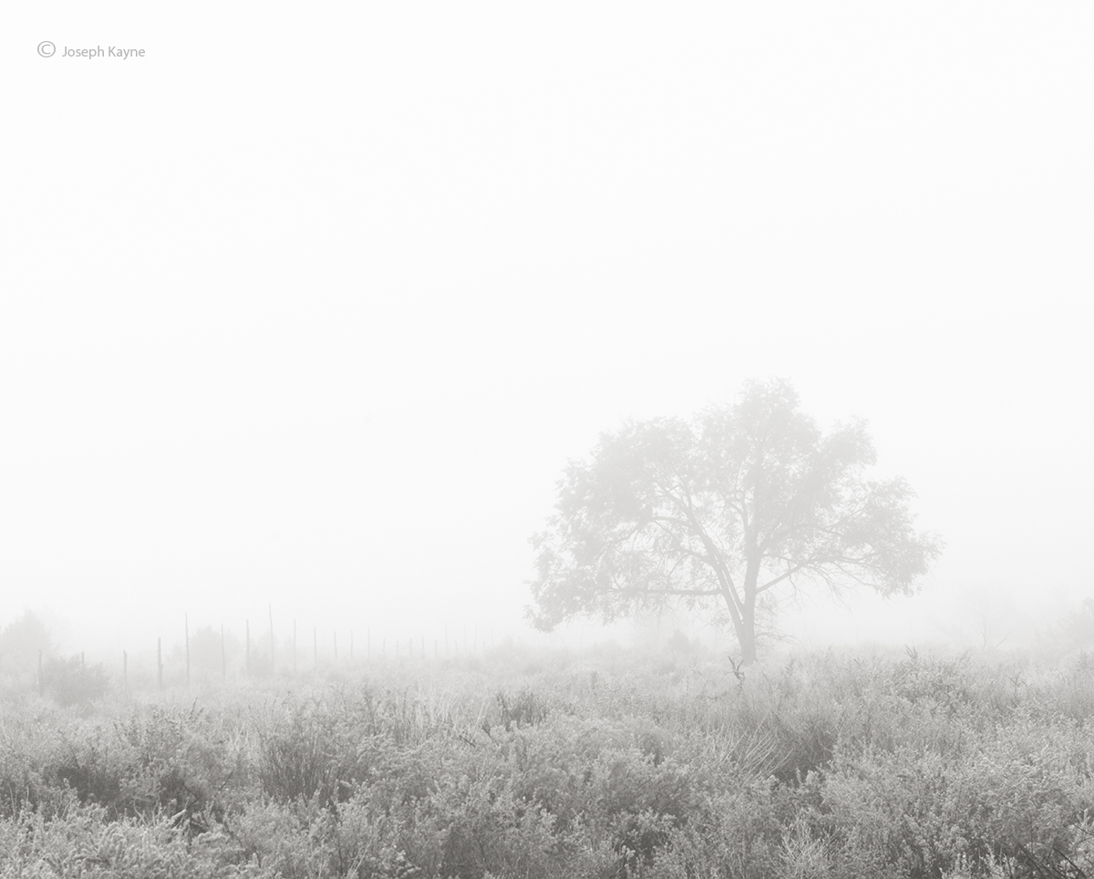 lone,tree,in,fog,foggy,morning,hubbell,trading,post, photo