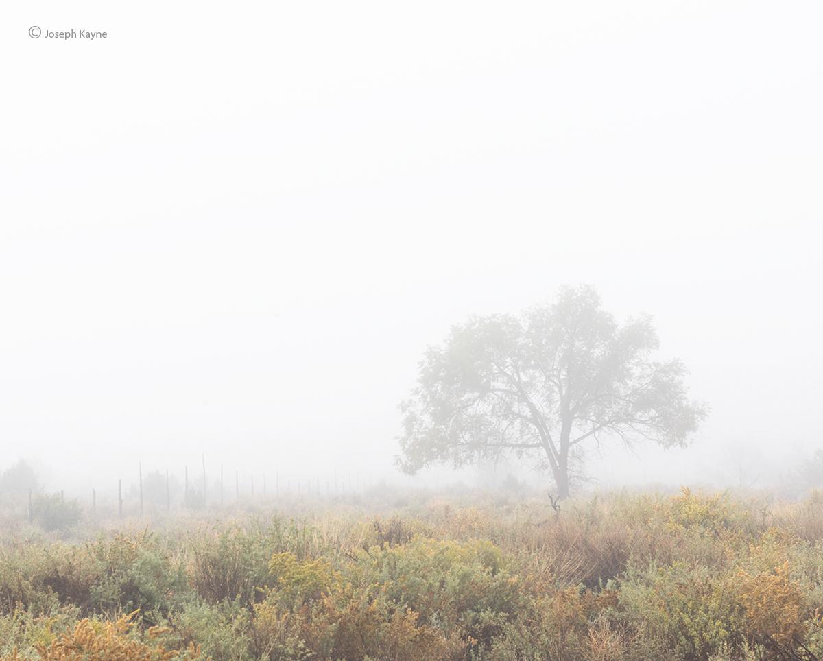 Foggy Morning in Navajoland