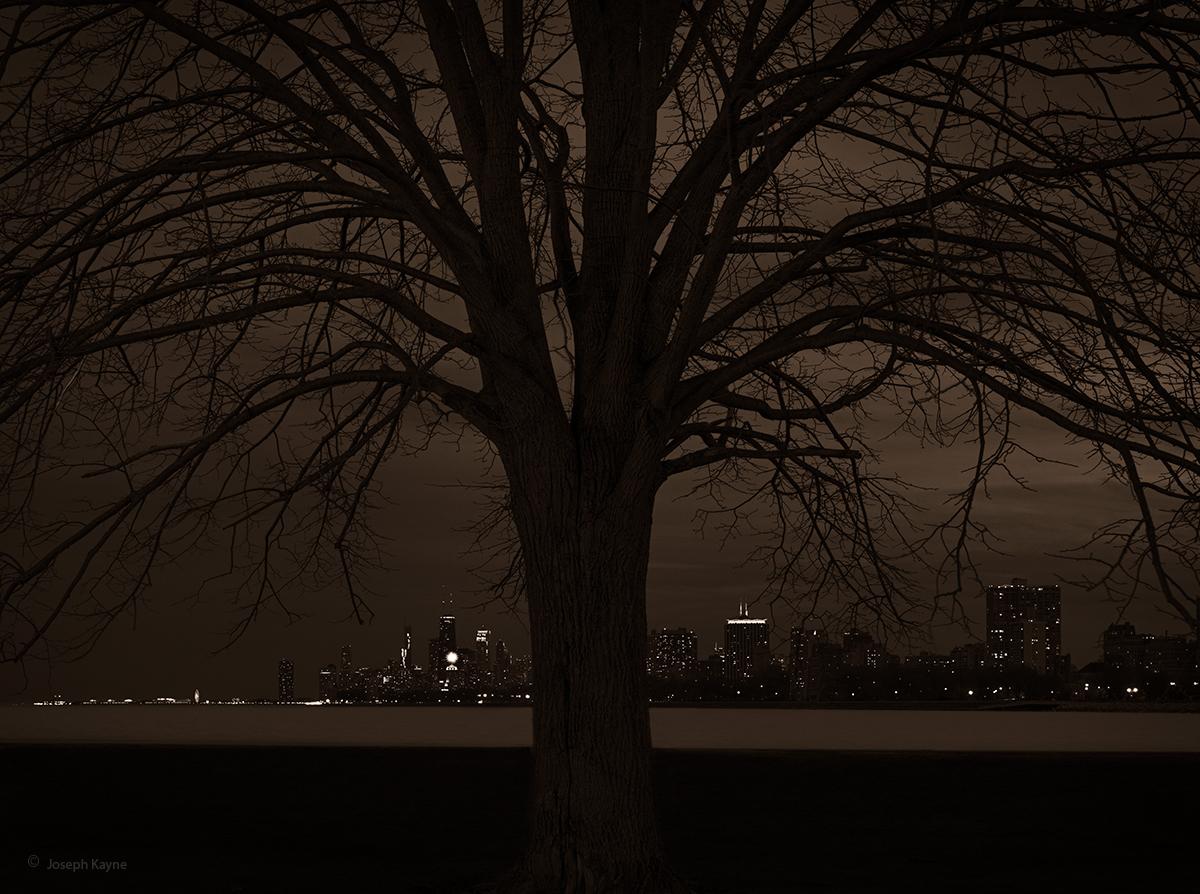 The Old Tree,Lake Michigan