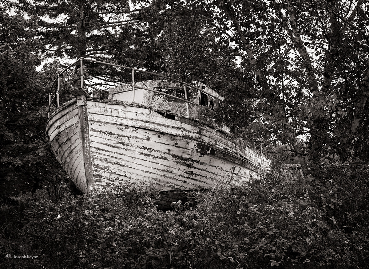 Old Boat In The Forest