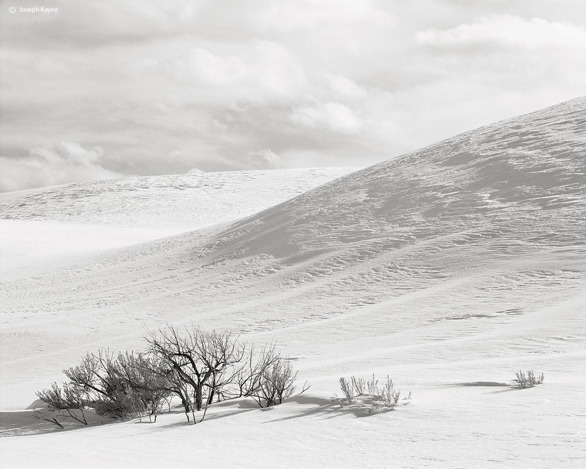 snow,mound,sagebrush,wyoming,yellowstone,national,park, photo