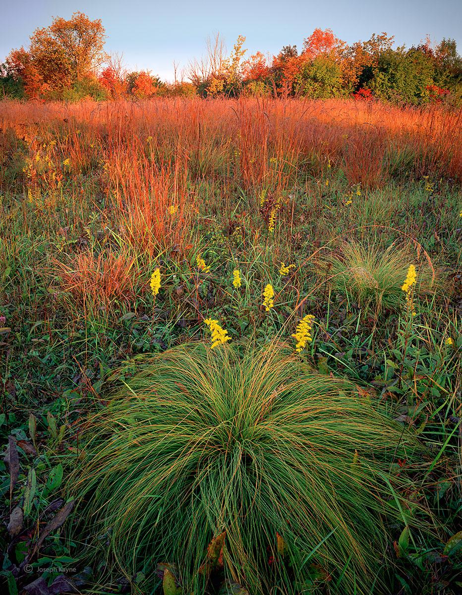 prairie,autumn,illinois,tallgrass, photo