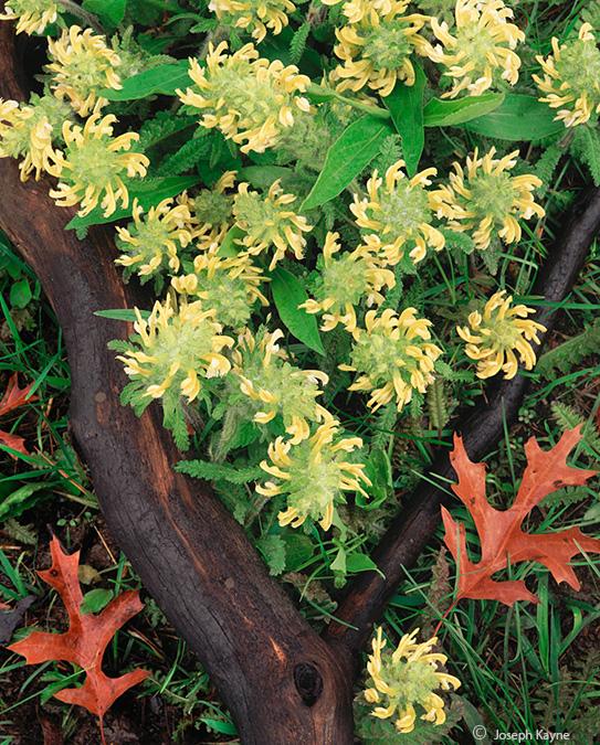 wood,bentony,illinois,savanna, photo