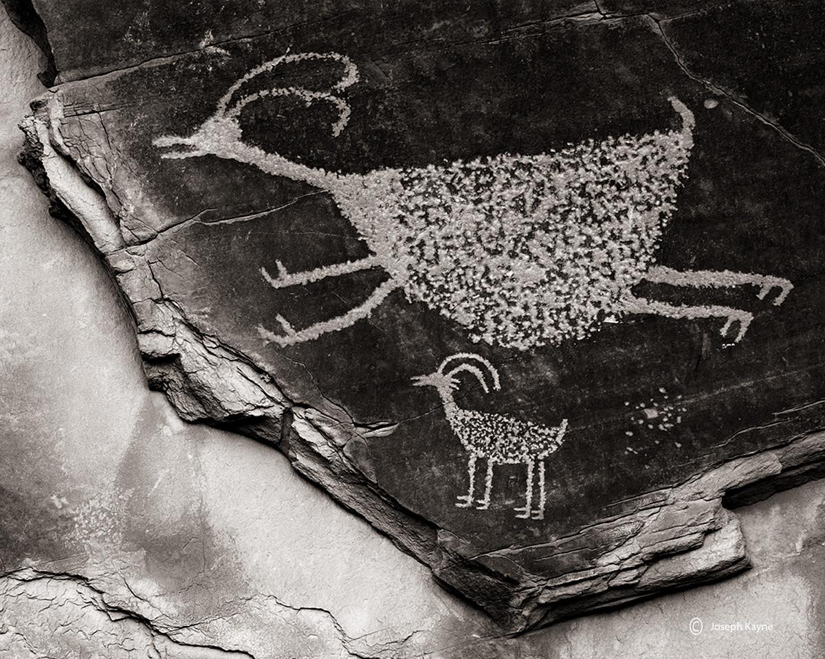 big,horn,sheep,petroglyph,colorado,plateau,anasazi,rock,art, photo