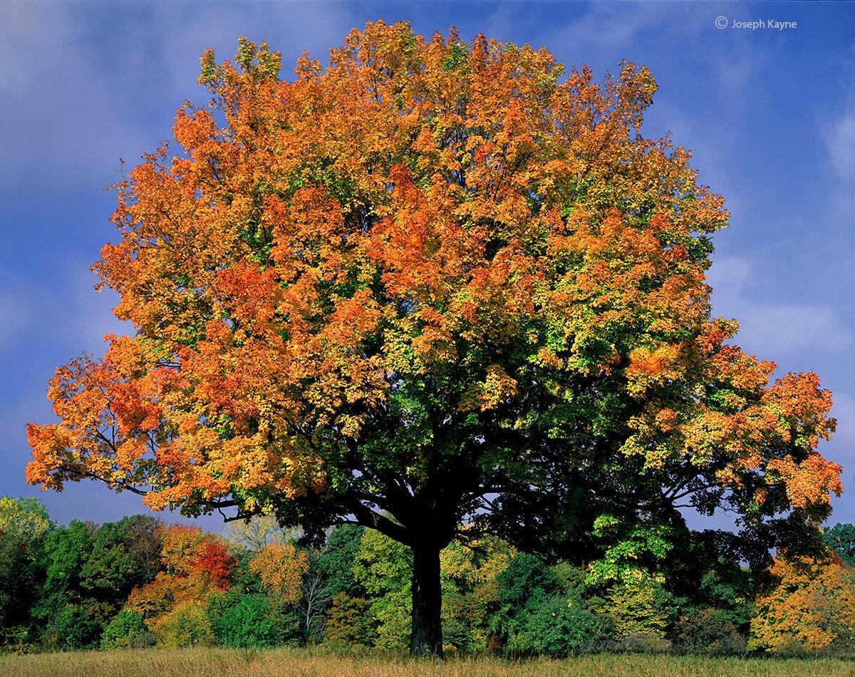 autumn,patriarch,illinois,ryerson,woods, photo