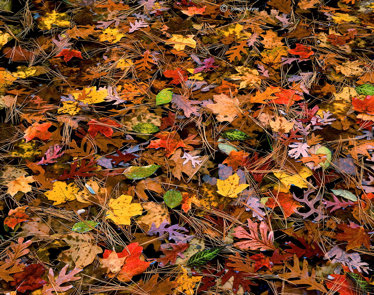 autumn,stars,illinois,floating,leaves, photo