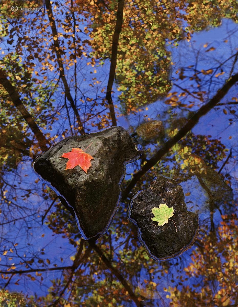 autumn,couple,illinois,mathiessen,state,park, photo